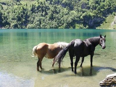 The horses of the Verdon