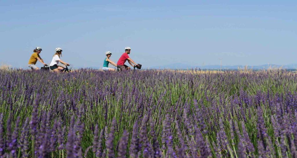 lavender fields in Verdon gorges France