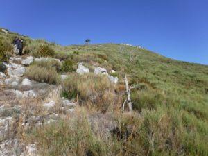 champ de genets Mont Robion